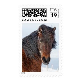 Regal Icelandic Horse Headshot Postage
