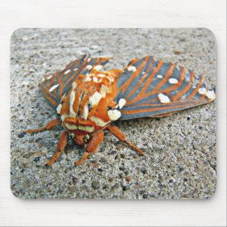 Regal moth mousepad
