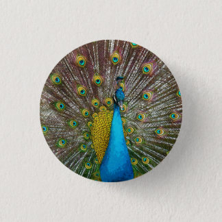 Regal Peacock with Teal and Gold Tail Feathers Pinback Button
