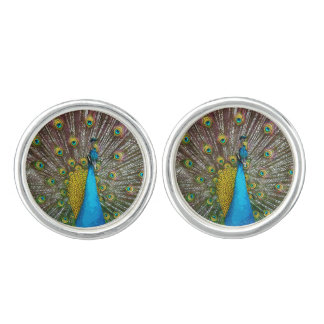 Regal Peacock with Teal Blue and Gold Plumage Cufflinks