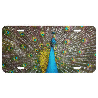 Regal Peacock with Teal Blue and Gold Plumage License Plate