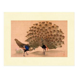 Regal Peacocks Postcard