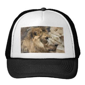 Regal Profile Trucker Hat
