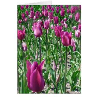 Regal Purple Tulips Card