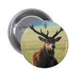 Regal Red Deer Button