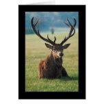 Regal Red Deer Greeting Cards