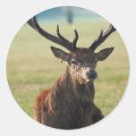 Regal Red Deer Stickers
