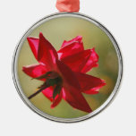 Regal Red Rose Back Lit Christmas Tree Ornaments