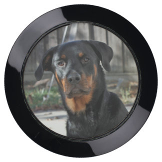 Regal Rottweiler ChargeHub