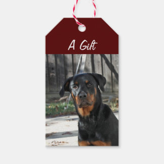Regal Rottweiler Gift Tags