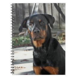 Regal Rottweiler Notebook