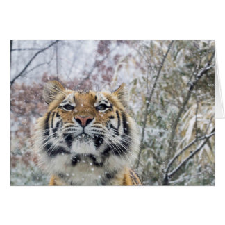 Regal Tiger in Snow Card