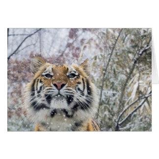 Regal Tiger in Snow Card