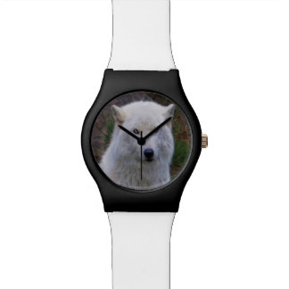 Regalo ártico blanco del retrato de la fauna del reloj