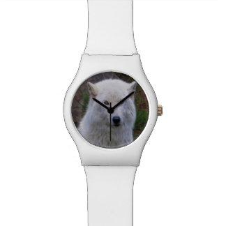 Regalo ártico blanco del retrato de la fauna del relojes