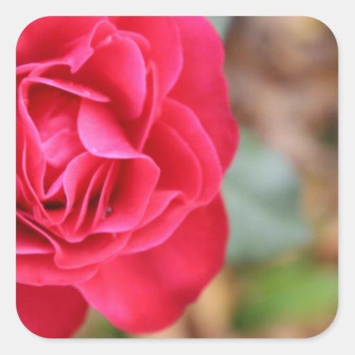 Regalo con color de rosa para el el día de San Pegatina Cuadrada