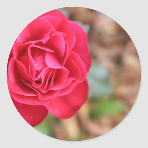 Regalo con color de rosa para el el día de San Val Pegatinas Redondas