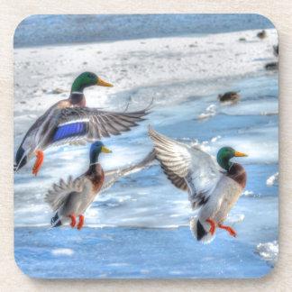 Regalo de la fauna de Drake del pato silvestre del
