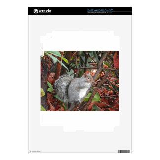 Regalo de la foto de la ardilla iPad 2 skin