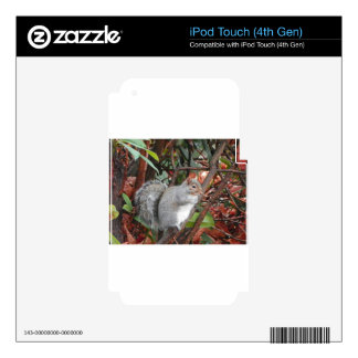 Regalo de la foto de la ardilla iPod touch 4G skins