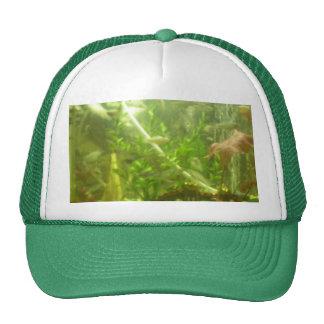 regalo de la ocasión del papá de la pesca de la ca gorras