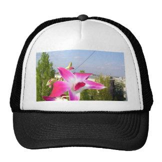 regalo de la ocasión del rosa de la orquídea del g gorros