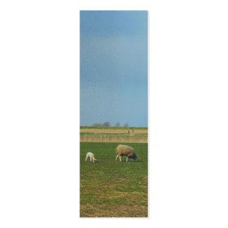 Regalo de la señal de la foto del paisaje de las tarjetas de visita mini