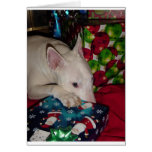 regalo de Navidad de bull terrier del inglés Felicitacion