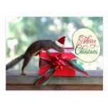 Regalo de Navidad de la abertura de la ardilla Tarjeta Postal