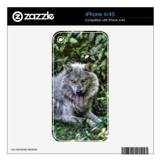 Regalo de reclinación de la fauna del lobo gris 3 calcomanía para el iPhone 4