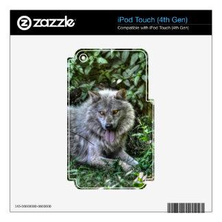Regalo de reclinación de la fauna del lobo gris 3 iPod touch 4G calcomanía