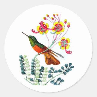 Regalo del estreno de una casa 9 del colibrí no pegatina redonda