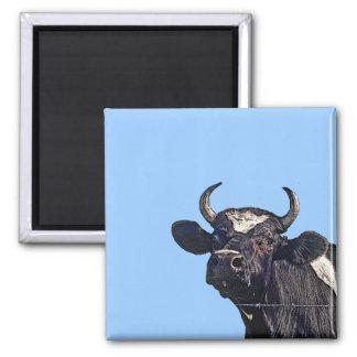 Regalo del ganado de Holstein Imán Cuadrado