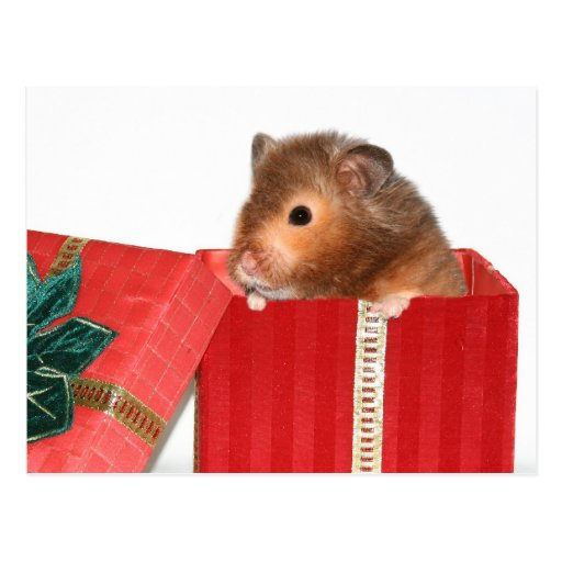 Regalo del navidad del hámster tarjeta postal