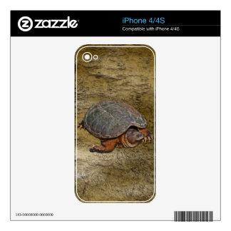 Regalo del Tortuga-amante de la tortuga de rotura Skin Para El iPhone 4