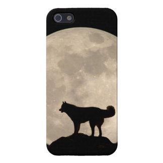 Regalo fornido del Malamute del husky siberiano iPhone 5 Carcasa