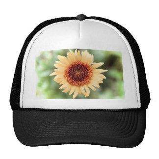 Regalo hermoso de la flor gorras