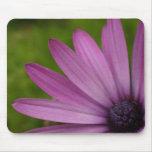 Regalo púrpura de la margarita africana del mousep tapete de ratones