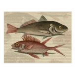 regalo rojo del pescador del vintage de la perca d postal