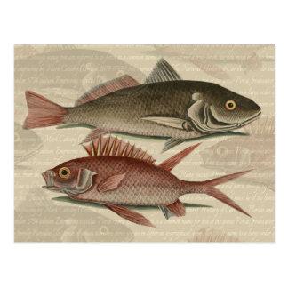 regalo rojo del pescador del vintage de la perca postal