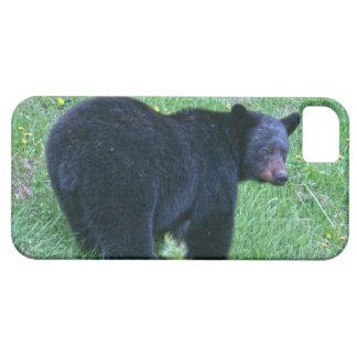 Regalo salvaje de la fauna de los Animal-amantes iPhone 5 Fundas