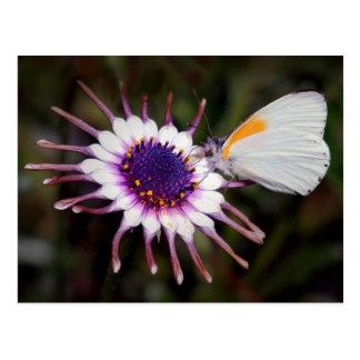 Regalos de la mariposa postales