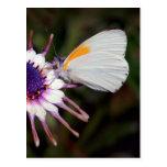 Regalos de la mariposa tarjeta postal