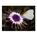Regalos de la mariposa tarjetas postales