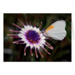Regalos de la mariposa tarjetón
