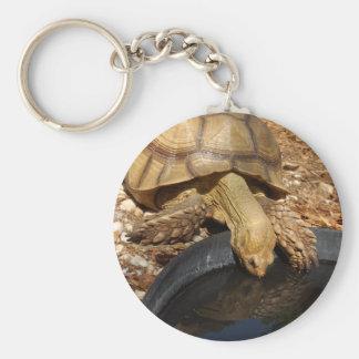 Regalos de la tortuga de Sulcata Llaveros Personalizados