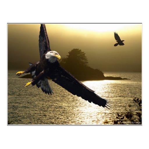 Regalos de motivación calvos de Eagle Postal