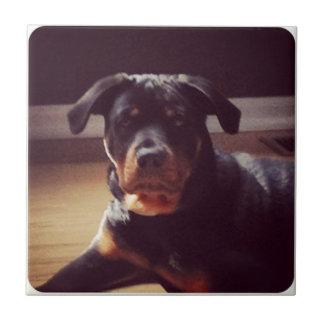Regalos de Rottweiler Azulejo Cuadrado Pequeño
