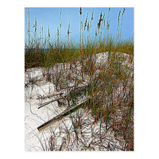 Regalos del arte de la Florida de la playa de Clea Postal