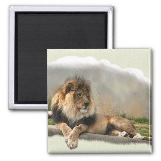 Regalos del arte de los amantes del león imanes de nevera